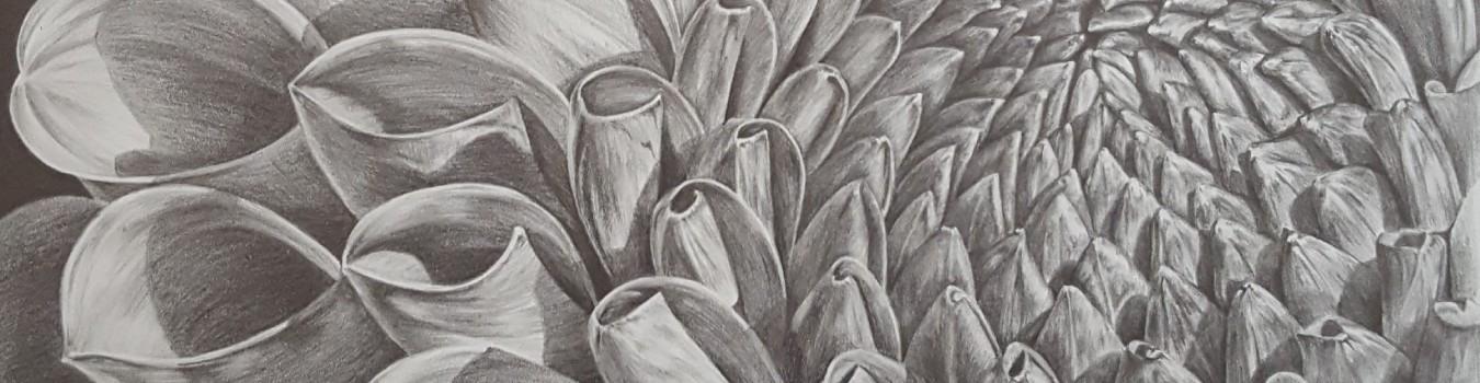 5fff94259e479-bp-cover-image